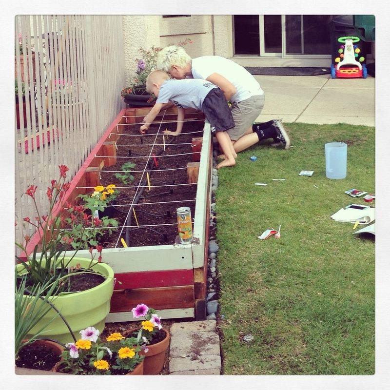 Gardenrudd